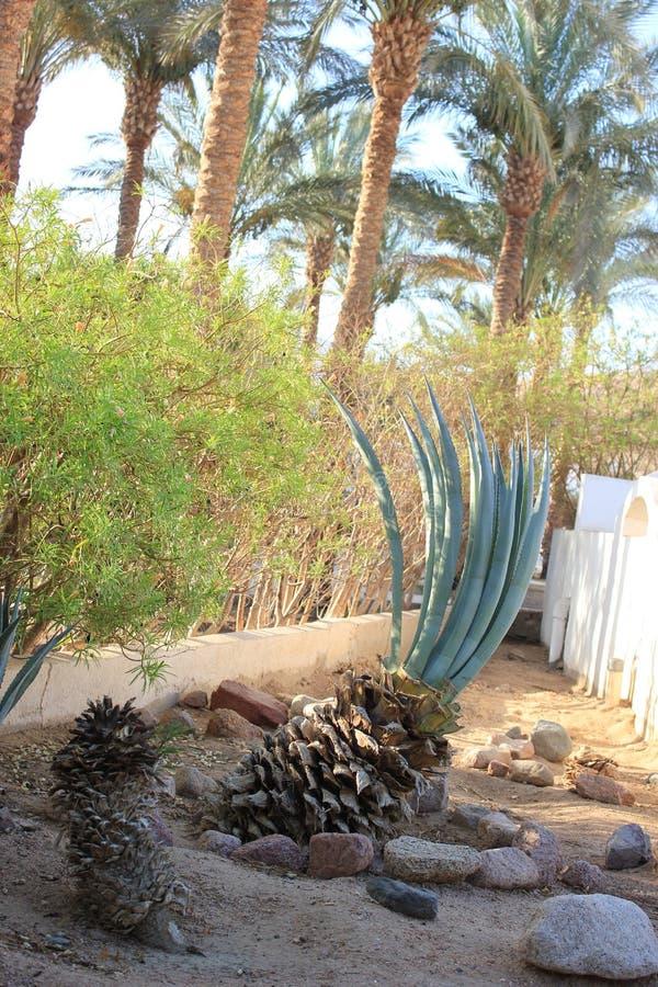 棕榈树和灌木和其他植物 免版税库存图片