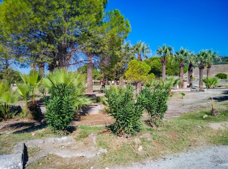 棕榈树和灌木在沙漠区域 免版税库存照片