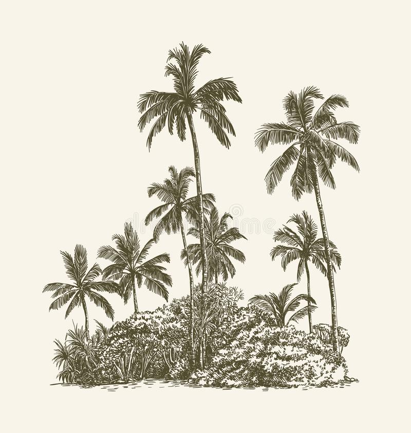 棕榈树和热带丛林在沙子 向量例证