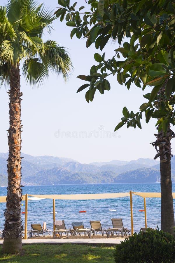棕榈树和热带树框架在海、sunbeds和山弄脏了背景 E 免版税图库摄影