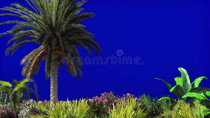 棕榈树和热带植物分支风的在蓝色屏幕上 背景美好的例证夏天向量 3d翻译 免版税库存照片