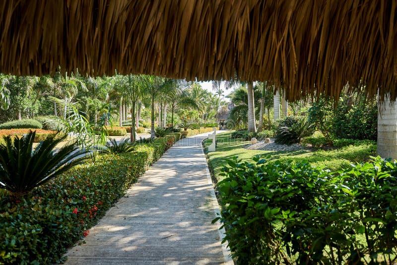 棕榈树和热带植被如被看见从可可椰子茅屋顶下面 道路显示阴影和太阳互相作用  库存照片