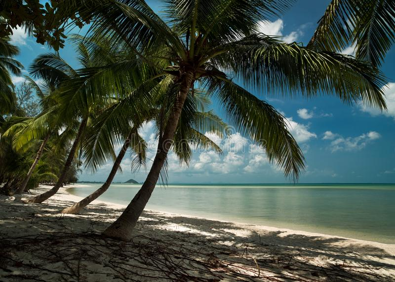 棕榈树和热带海滩 库存图片