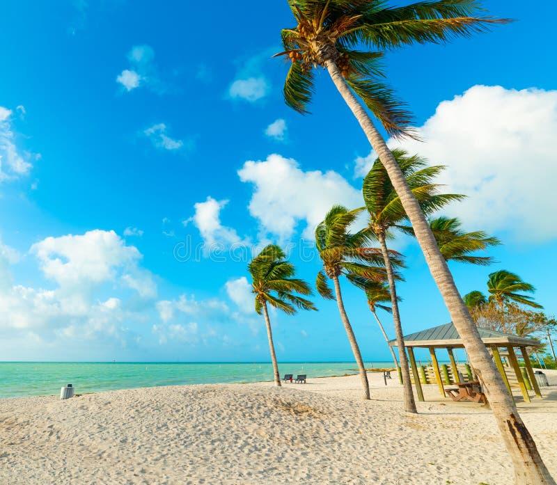 棕榈树和白色沙子在阔边帽海滩在佛罗里达群岛 图库摄影
