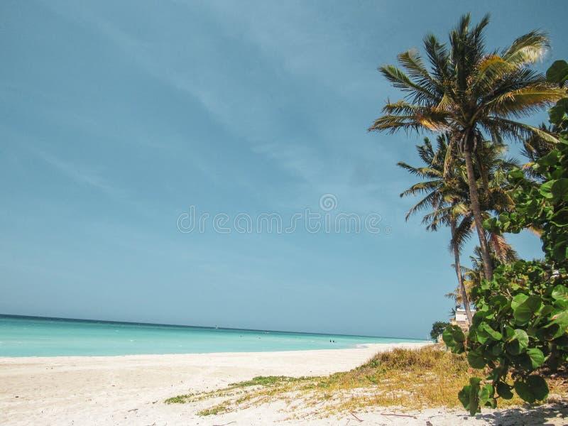 棕榈树和白色沙滩在日落在Caribbeans 库存照片