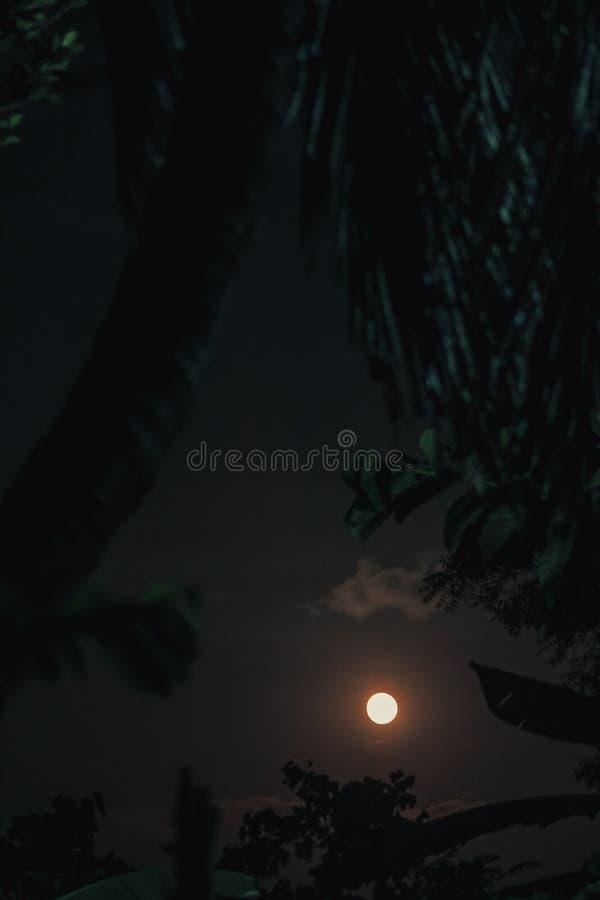 棕榈树和moonscape 图库摄影