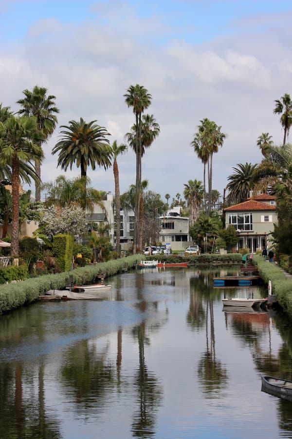 棕榈树在一条运河反射在威尼斯,加利福尼亚 库存图片