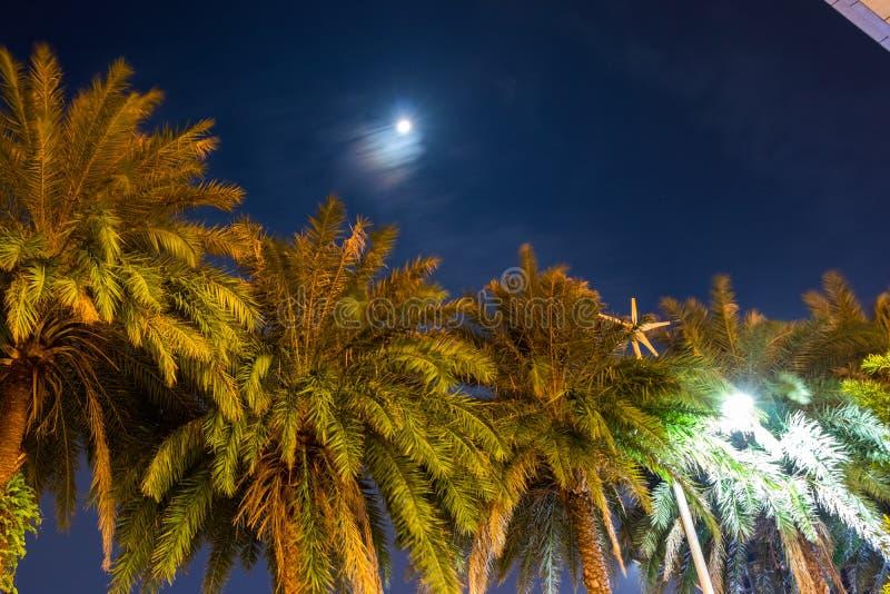 棕榈树在反对天空的晚上 绿色留下掌上型计算机 库存照片