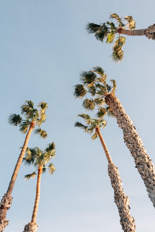 棕榈树在圣克莱芒特,橙县,加利福尼亚 免版税库存照片