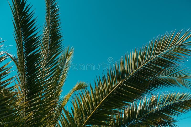 棕榈树在天空的背景中 库存照片