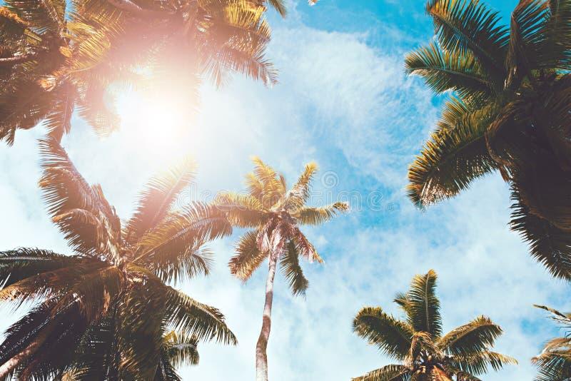 棕榈树在太阳和天空蔚蓝背景离开 周末假日热带海滩概念背景,假期假日概念 免版税图库摄影
