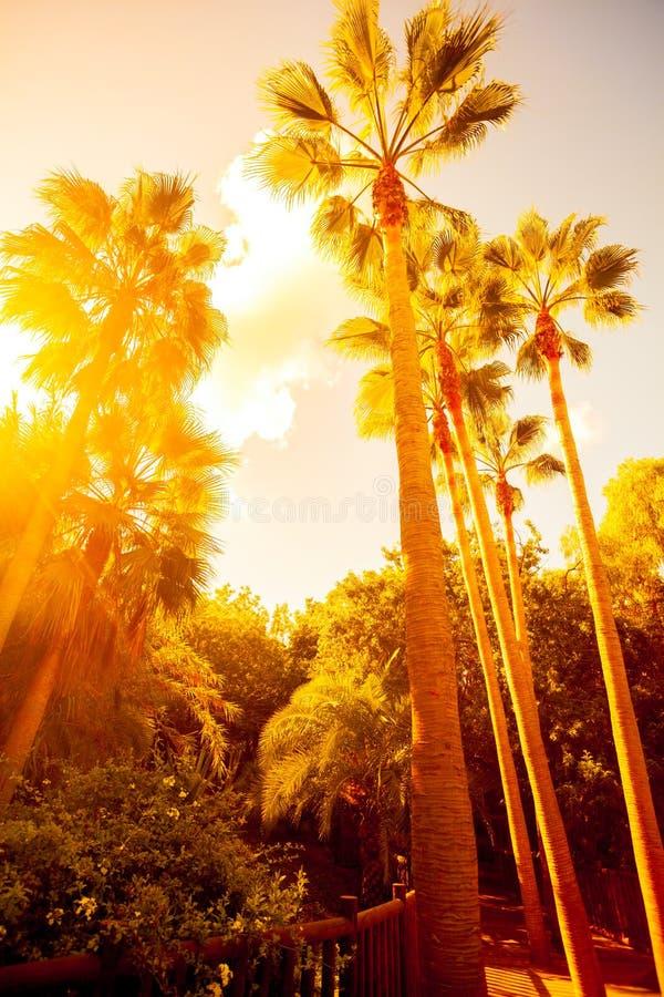 棕榈树在密林 库存照片