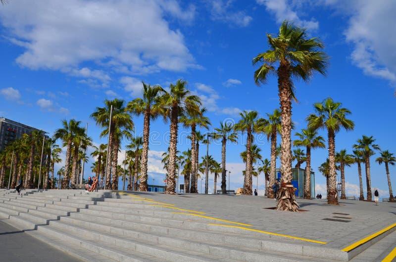 棕榈树在巴塞罗那,西班牙 免版税库存图片