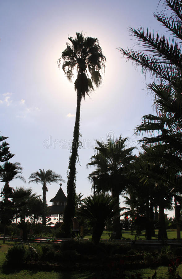 棕榈树在有后边太阳的庭院里 免版税图库摄影