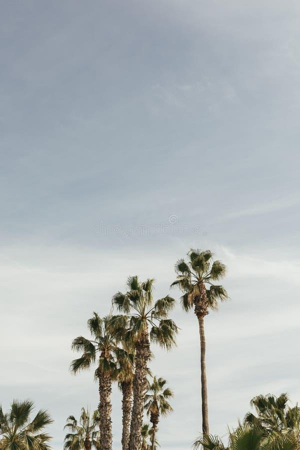 棕榈树在有天空蔚蓝的马拉加 免版税库存照片
