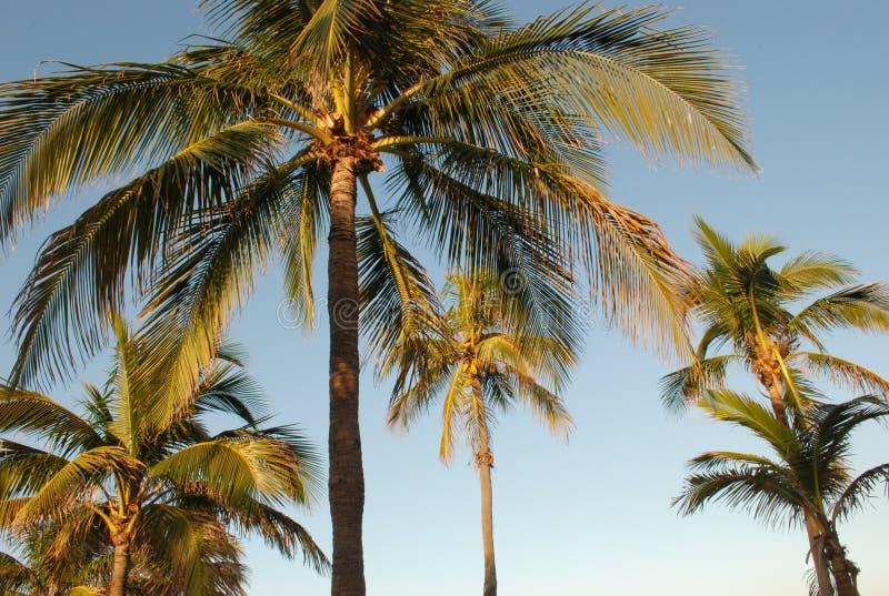 棕榈树在热带天空下 免版税库存照片