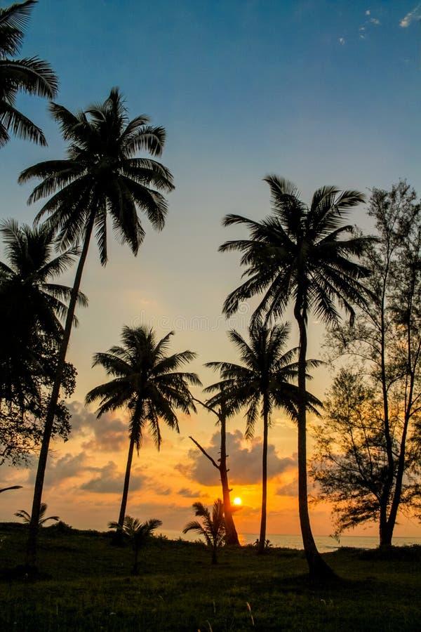 棕榈树在热带的日落剪影 免版税库存照片