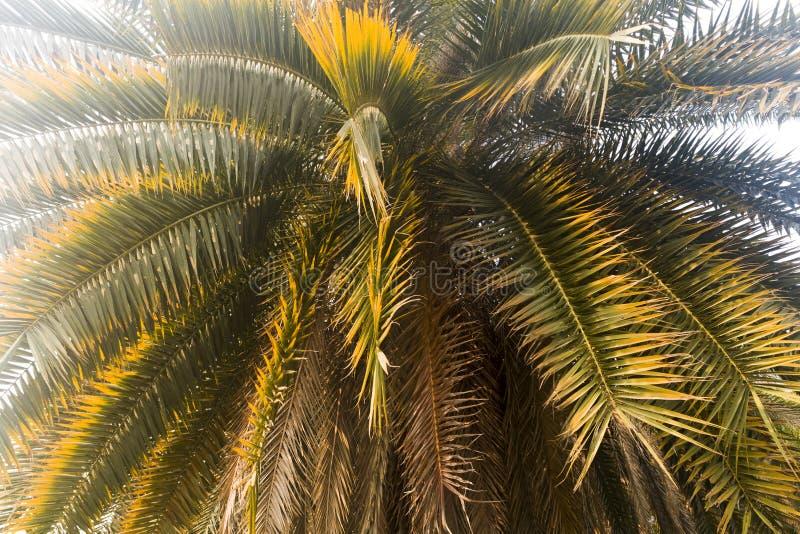 棕榈树在白色天空离开 库存图片