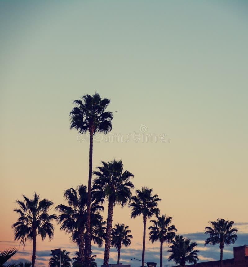棕榈树在洛杉矶 库存图片