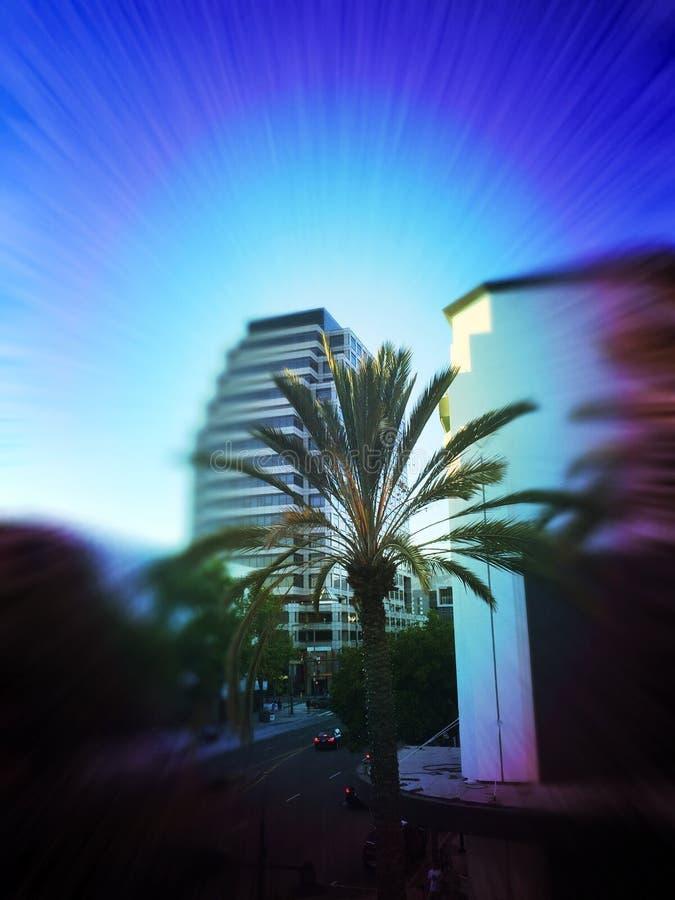 棕榈树在Gelendale加利福尼亚 免版税库存图片