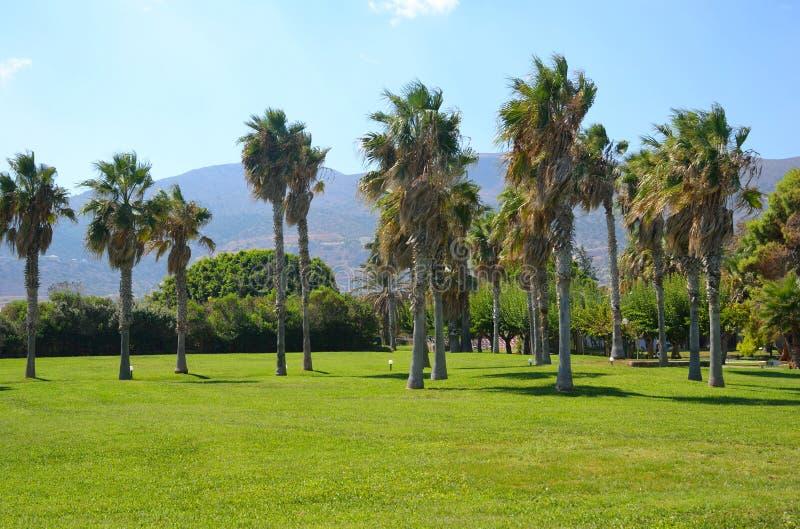 棕榈树在Malia 免版税图库摄影