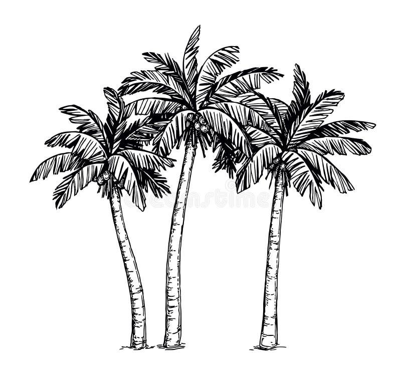 棕榈树墨水剪影  皇族释放例证