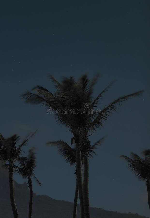 棕榈树夜摄影在垦丁国家公园 免版税库存图片