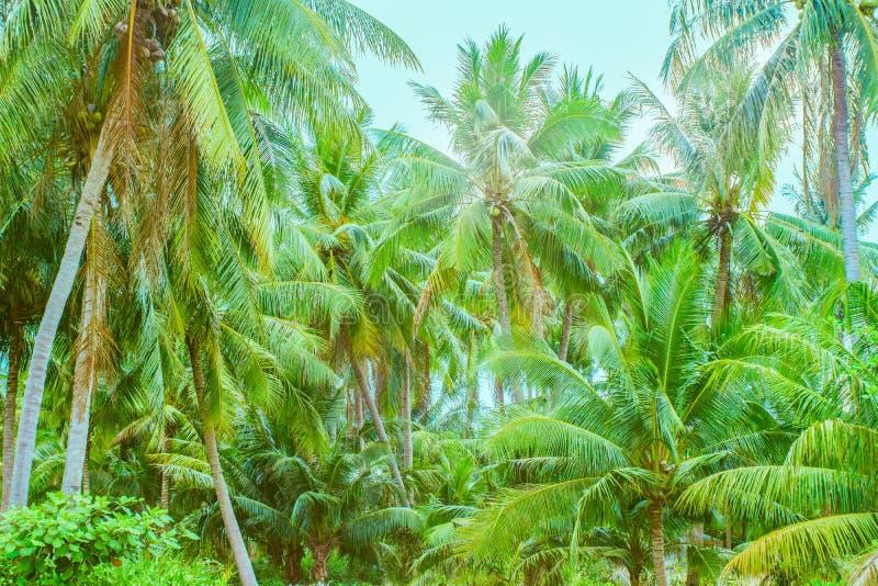 棕榈树密林 库存图片