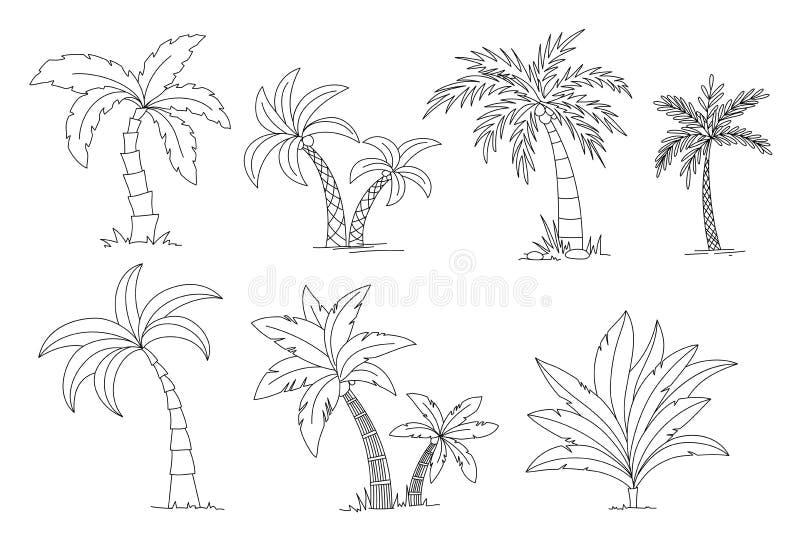 棕榈树彩图 美丽的vectro palma树集合传染媒介例证 皇族释放例证