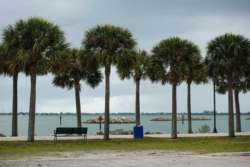 棕榈树排行了沿边的步行两岸间 库存图片
