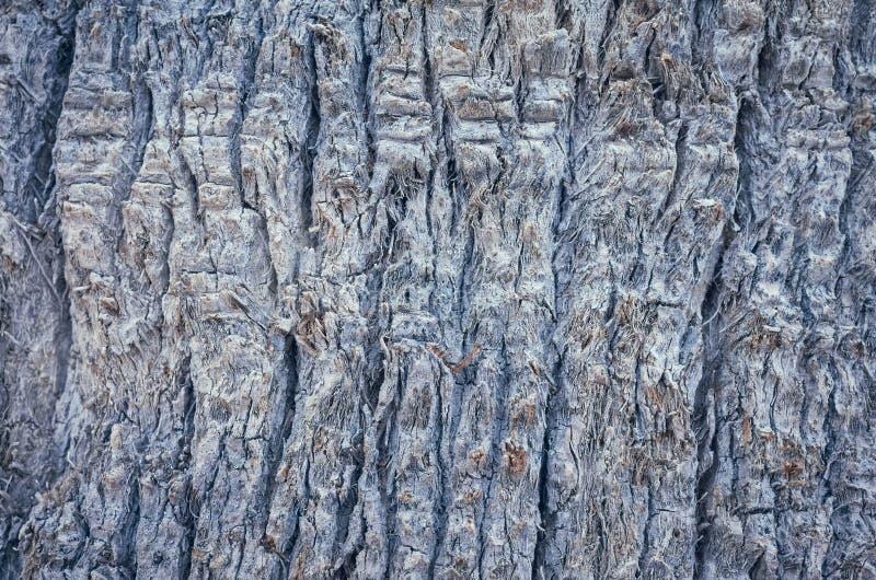 棕榈树树干、自然抽象背景或者纹理 免版税库存图片