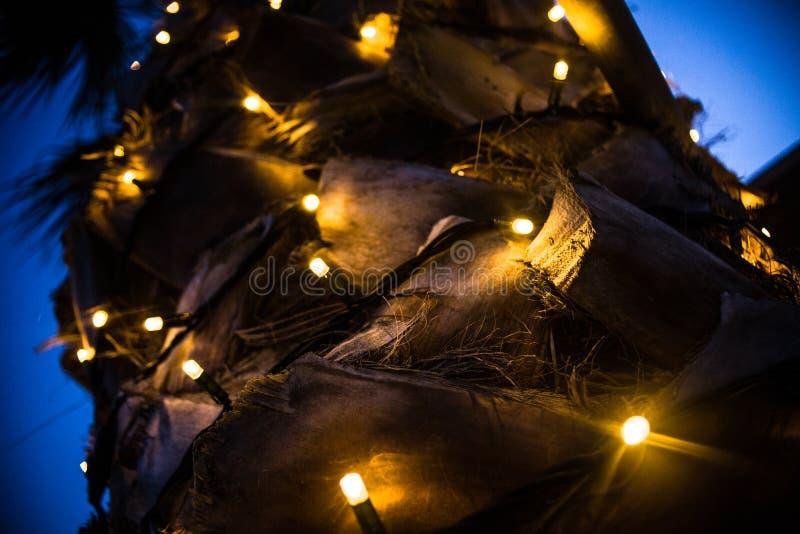 棕榈树树干特写镜头向上射击  微小的LED在被切开的吠声附近点燃闪耀的套 热带四季不断的植物为 库存照片