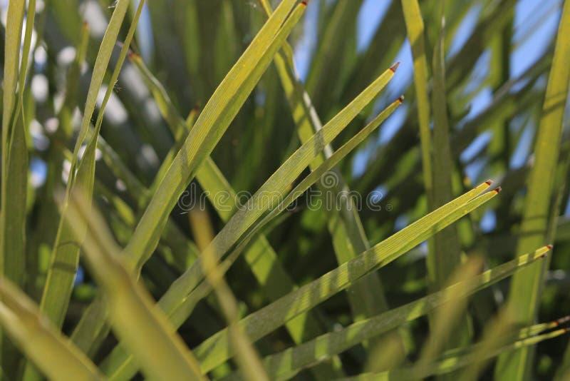 棕榈树棕榈树荫和天空 免版税图库摄影