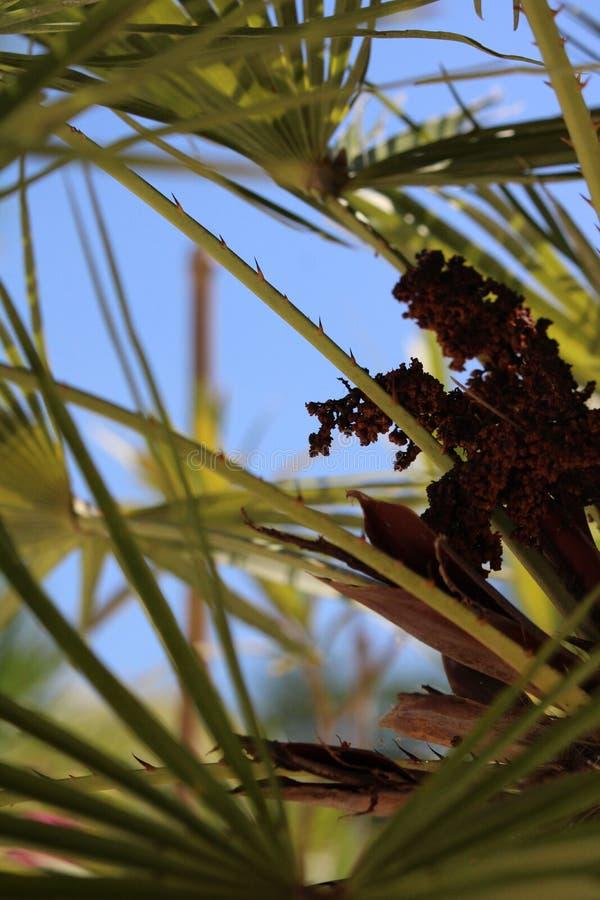 棕榈树棕榈树荫和天空 图库摄影