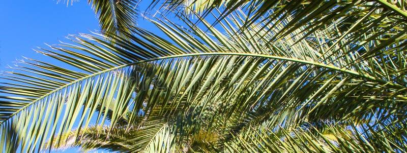 棕榈树横幅-反对蓝天的叶子 免版税图库摄影