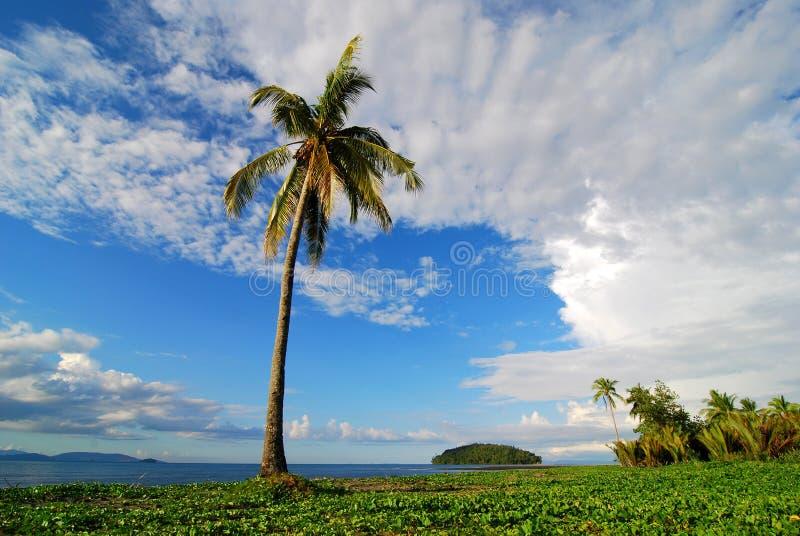 棕榈树海滩场面 库存图片