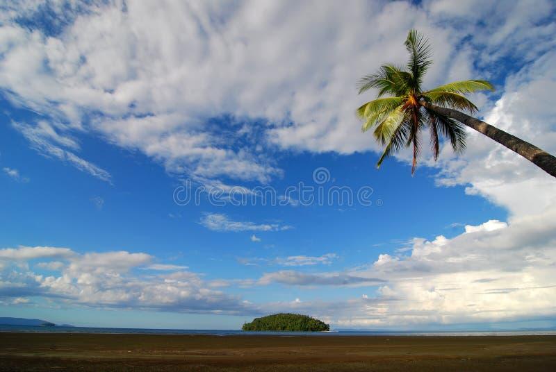 棕榈树海滩场面 免版税库存照片