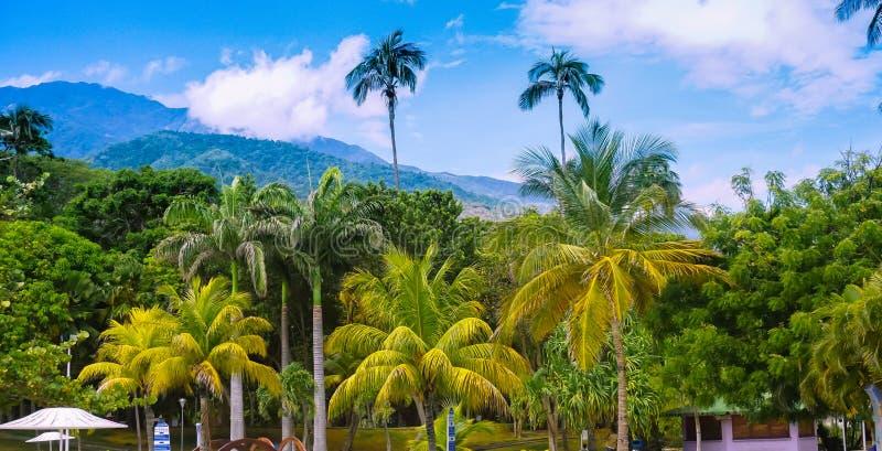 棕榈树热带风景  库存照片