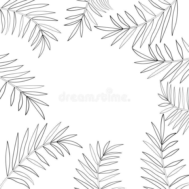 棕榈树留下边界1图片