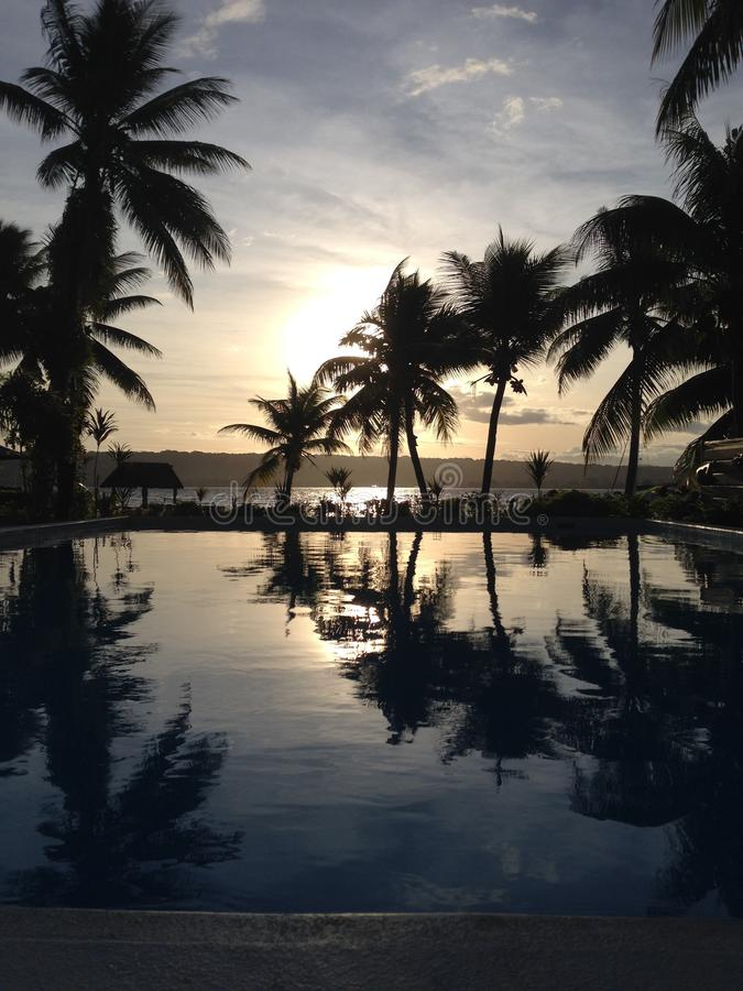 棕榈树的反射在水池的 库存图片