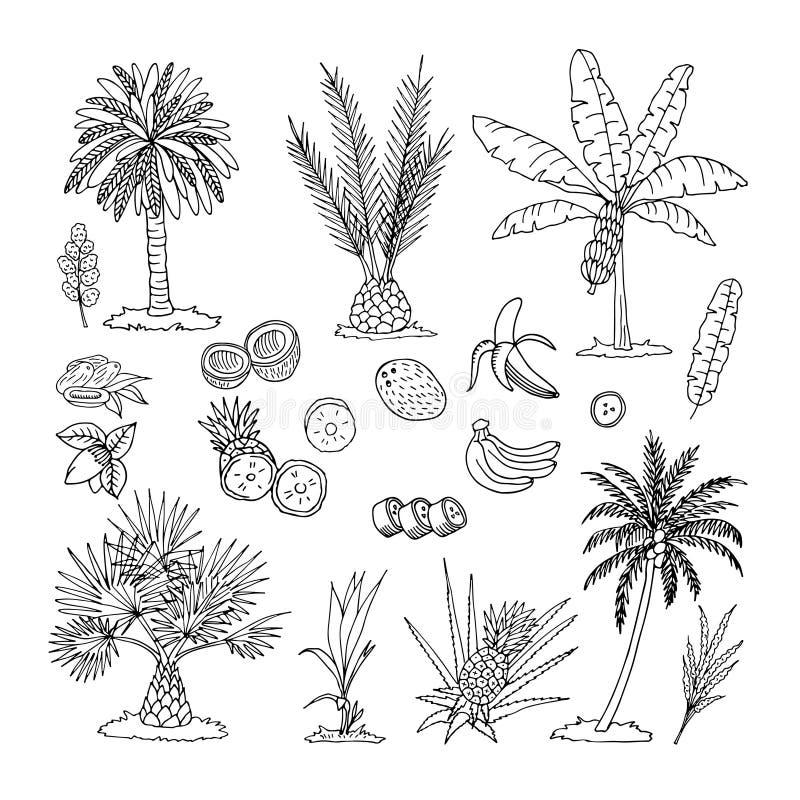 棕榈树的手拉的传染媒介例证在白色背景隔绝的 草图图片