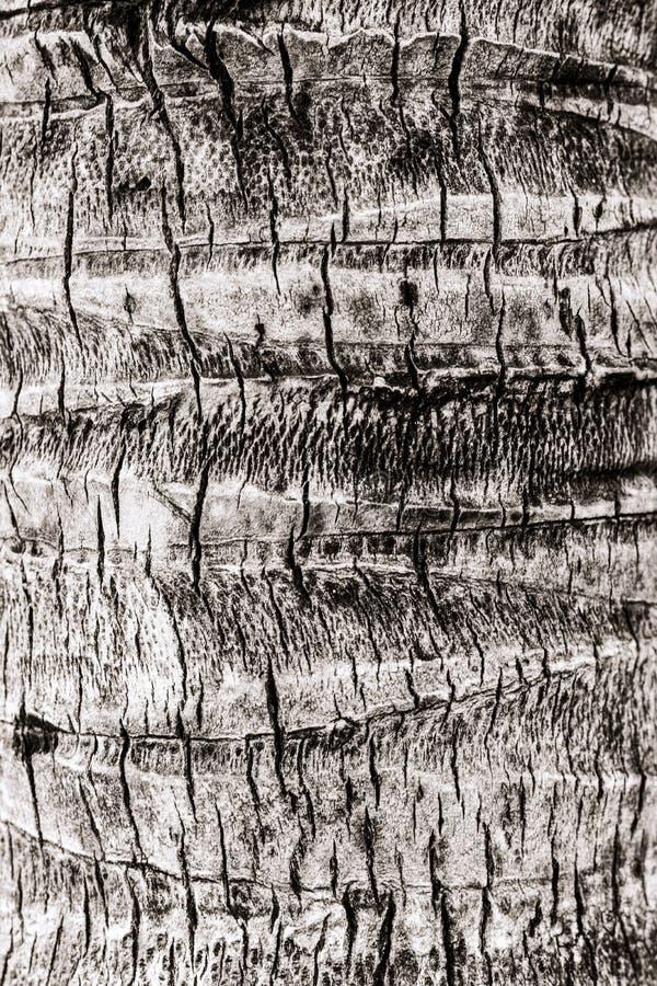棕榈树的树干的结构 免版税图库摄影
