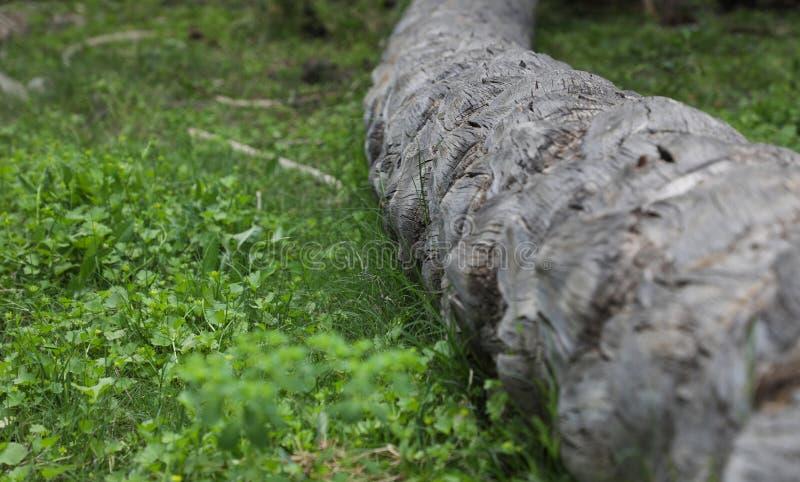 棕榈树的树干落与绿色植物在它下 免版税图库摄影