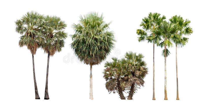 棕榈树的汇集在白色背景隔绝的 库存照片