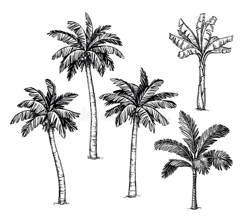 棕榈树的汇集 皇族释放例证