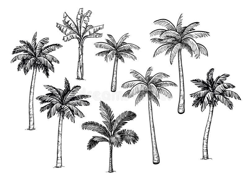 棕榈树的汇集 向量例证