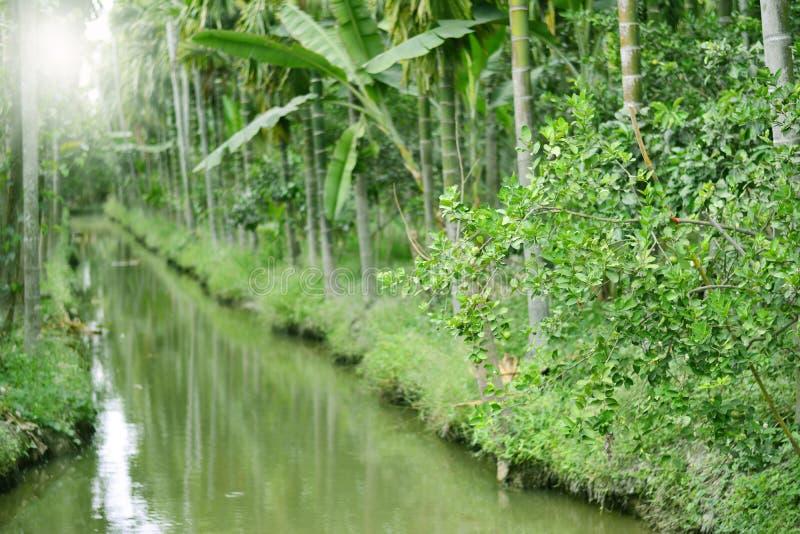 棕榈树的河与softlight 免版税图库摄影