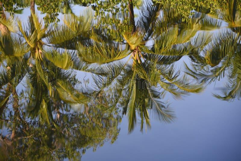 棕榈树的澳大利亚美好的反射在镇静湖 免版税库存照片