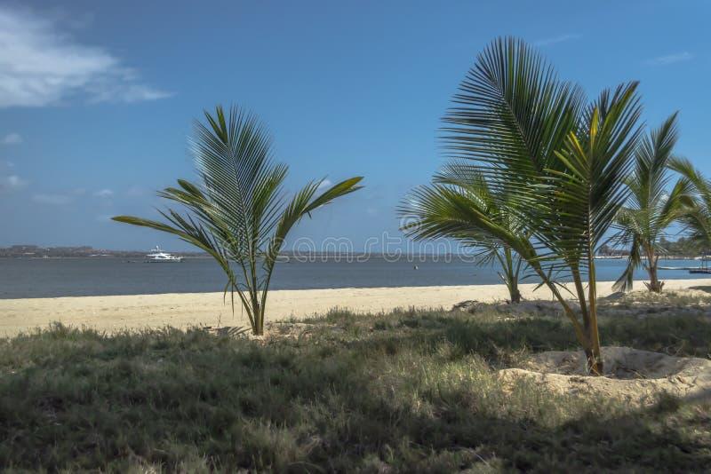 棕榈树看法在海滩和小船的在水,在Mussulo海岛上,罗安达,安哥拉 免版税库存照片
