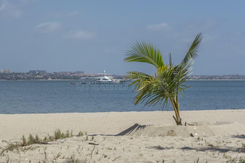 棕榈树看法在海滩和小船的在水,在Mussulo海岛上,罗安达,安哥拉 库存照片